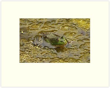 Frog October by Thomas Murphy