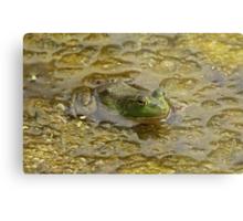 Frog October Metal Print