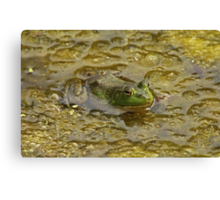 Frog October Canvas Print