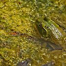 Frog November by Thomas Murphy