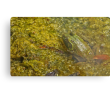 Frog November Metal Print