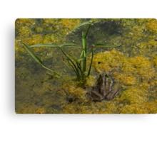 Frog December Canvas Print