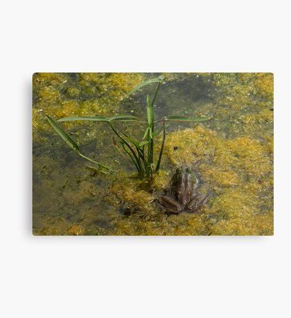 Frog December Metal Print