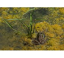 Frog December Photographic Print