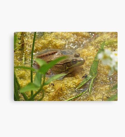 Frog August Metal Print