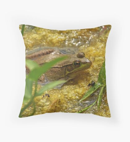 Frog August Throw Pillow
