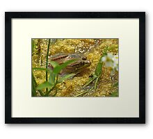 Frog August II Framed Print