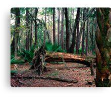 Fallen Oak.  Canvas Print