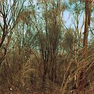 After the bushfire, Gindalbie - Box Brownie & 35mm film by Melissa Drummond