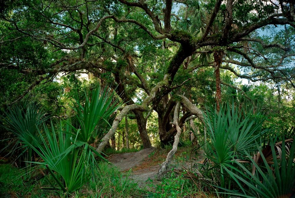 Palm and Oak. Three Lakes W.M.A. by chris kusik