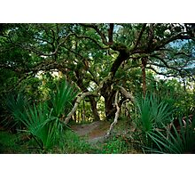 Palm and Oak. Three Lakes W.M.A. Photographic Print