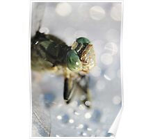 Lightly Watered Dragonfly Poster