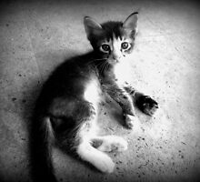 Just a cat by Vivek George Koshy