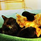 Maui the Cat (aka-Booky) Sleeping With His Baby Kitten, Stuffed Animal by MJD Photography  Portraits and Abandoned Ruins