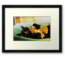 Maui the Cat (aka-Booky) Sleeping With His Baby Kitten, Stuffed Animal Framed Print