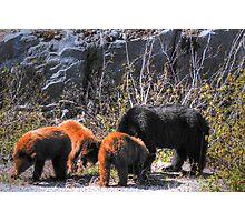 Mumma Bear and Baby Bears Photographic Print