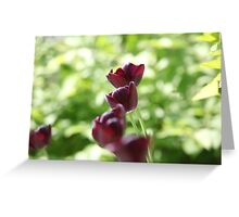 bright burgundy flowers tulips Greeting Card