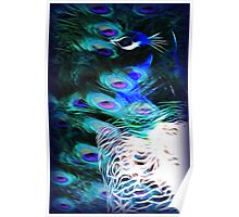 Peacock Blue Poster