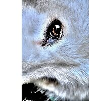 Eyes of an Angel Photographic Print
