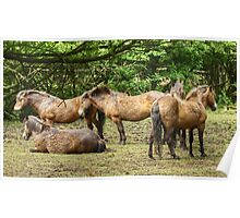 Ponies Poster