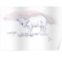 Pencil Drawing of a Cute Lamb Poster
