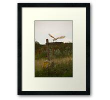 Barn owl on location. Framed Print