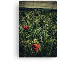 In Flanders Fields Canvas Print