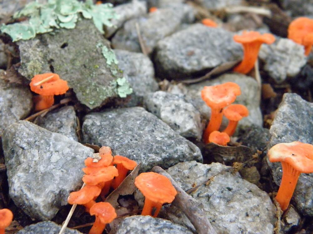 Mini Rock Garden  by AJ Belongia