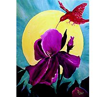 Purple Iris Photographic Print