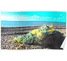 Tangled Beach - Seaford UK Poster