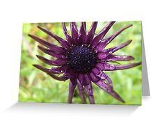 simple beauty Greeting Card