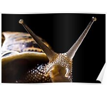Bugs Life - Waazzz upppp! Poster