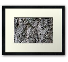 Silverbirch Bark Framed Print