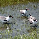Sea Gulls Waiting by Laurel Talabere