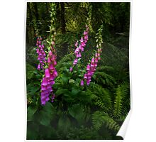 Pink and Green ~ Wild Foxgloves ~ Poster