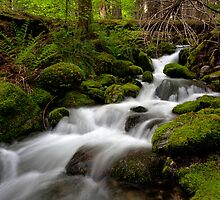 Tranquil Forest Creek by mikereid