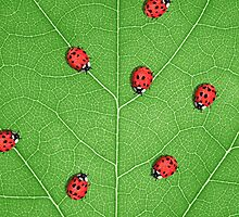 Dance of the Ladybugs-iPhone case by Carlos Phillips