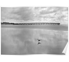 Seagull Black and White Poster
