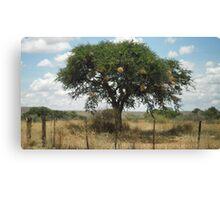The Tree Canvas Print