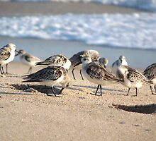 Beach Party. Sebastion inlet. by chris kusik