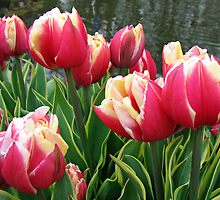 Tulips Dreaming - Keukenhof Gardens by Kathryn Jones