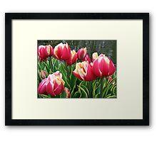 Tulips Dreaming - Keukenhof Gardens Framed Print