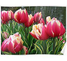 Tulips Dreaming - Keukenhof Gardens Poster