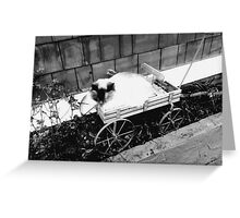 in a lonely place. Greeting Card
