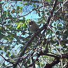 Small bird by thedinosaurman