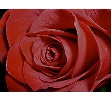 A Rose for You Photographic Print