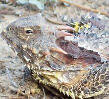 Horned lizard by thedinosaurman