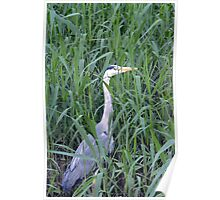 Grey Heron - Spittle Brook Poster