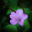 Little Pink by TheCroc1979