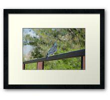 Bird sitting on railing Framed Print